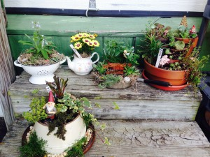 One Of A Kind Container, Succulent And Fairy Gardens, Miniature Plants And  Fairy Garden Accessories.